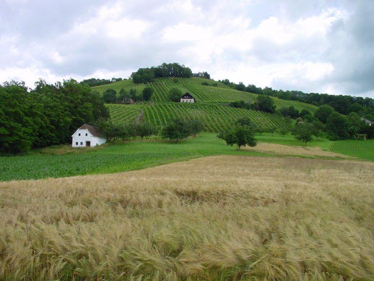 Neuberg - Weingärten